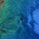 Paleta de Colores en isla Coronados