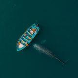 Santuario de la ballena gris